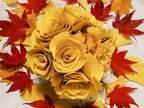 黄色に染まったイチョウで作るブーケ その美しさに感嘆の声が寄せられる【全4枚】