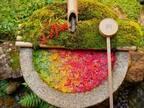 京都で見つけた美しすぎる秋 その光景に息をのむ