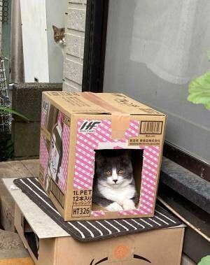 段ボール箱におさまる猫を撮影したら? 背後に写ったモノに「笑った」「ヤバすぎる」