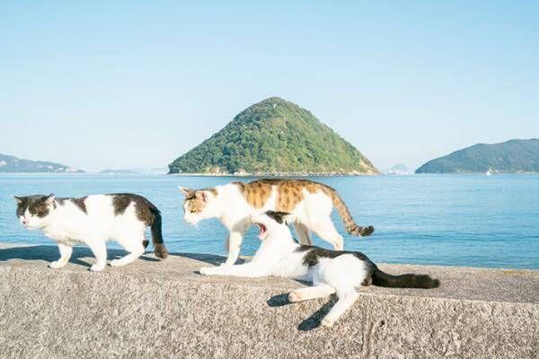 「完全に4コマ漫画」「爆笑した」 日向ぼっこをして眠っていた猫の近くを…?