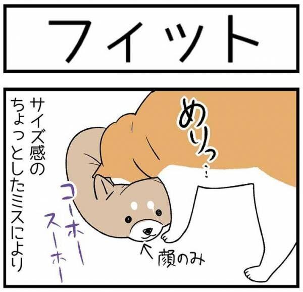 母親が「布団を干そうかね」というと? 柴犬と猫の『反応』を、お楽しみください