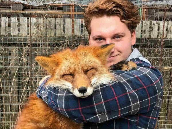 woody_the_fox