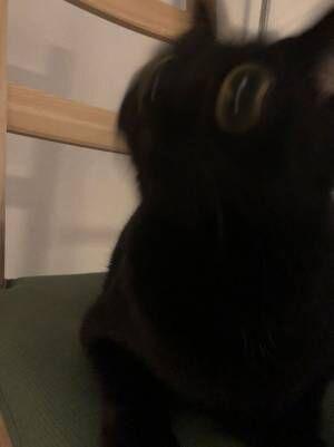 飼い主が猫の撮影に失敗した結果? 「笑いが止まらない」「最高の瞬間」の声