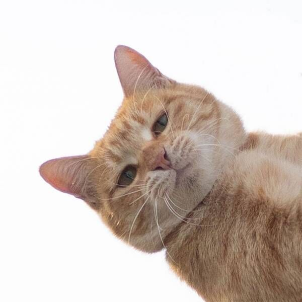 かっこいい1枚を撮ったはずが? 猫の表情に吹き出す人続出 「目で訴えている」