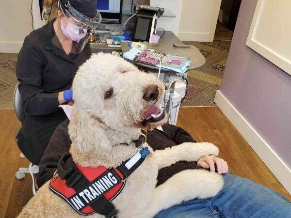Fetch Dog Training LLC.