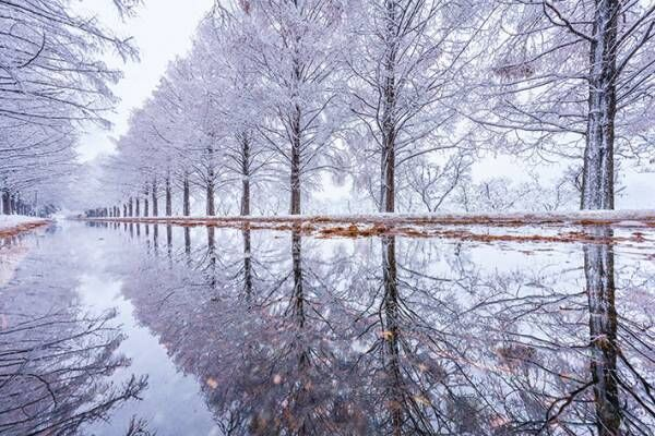 初雪の滋賀県で撮影された4枚の写真が美しすぎた