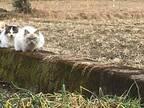畑から謎の視線 その光景に「吹き出した」「最高!」