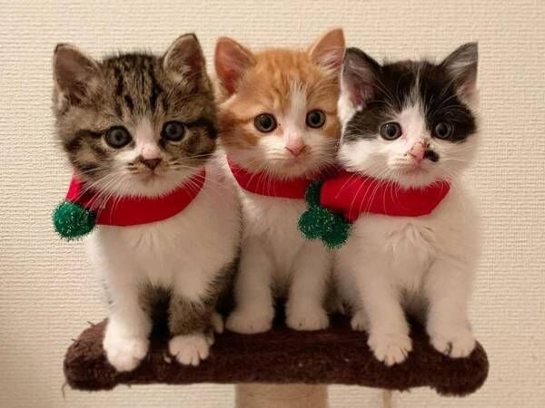 【全6枚】茂みで保護された子猫3兄妹がかわいすぎる シンクロ率がハンパない!