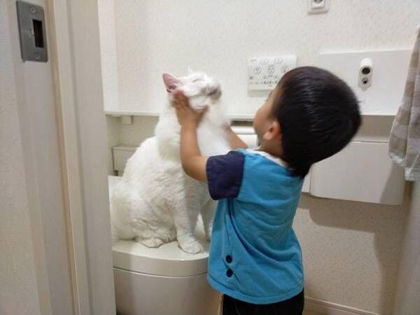 トイレをめぐる猫vs3歳児の戦い! その様子に「爆笑した」「なんて平和な争い」