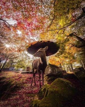 神の使い? 奈良公園で撮影されたシカがオシャレすぎる!