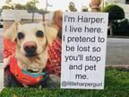 道端に座る犬 迷い犬かと思ったら? そばにあった看板の内容に吹き出す!