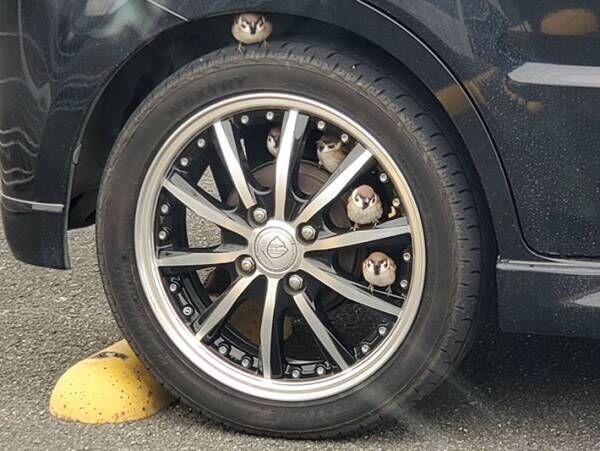 駐車場に停めていた車のタイヤ付近に1羽のスズメ しかし、次第に増えていき?