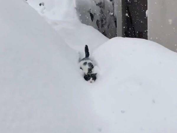 『除雪車』のように突き進む猫に驚愕! 「なんてたくましいの…」