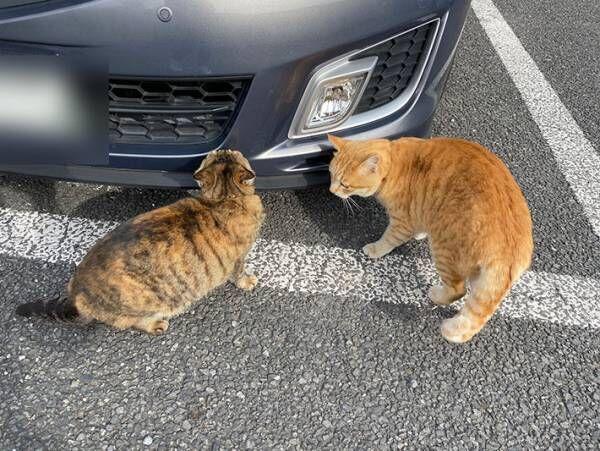 「盗むつもりか?」 白昼堂々、車の周りをウロウロする怪しい影の正体とは