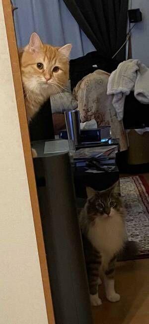 『猫あるある』で飼い主が涙目に 光景をとらえた2枚がコチラ!