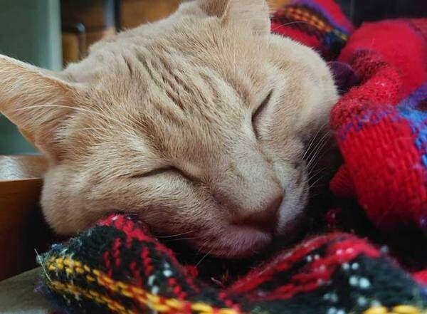 胃が痛くて寝ていた飼い主 猫たちの『行動』に、ジーン