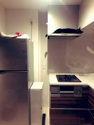 キッチンを写した『4枚』に6万人が悶絶 換気扇の上にいたのは…?