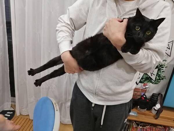 「なぜこうなった」 抱っこされる黒猫の全貌に、吹き出す人が続出