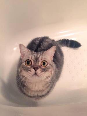 「これなんだ…?」 猫がお風呂で発見したモノに吹き出す