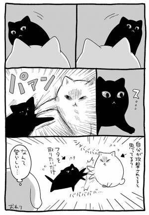 ペットボトルのフタで遊んでいた猫 『無慈悲な展開』に、笑いがこみ上げる