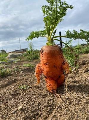 畑で収穫された『ヤバいニンジン』 ネット上で盛り上がった理由とは