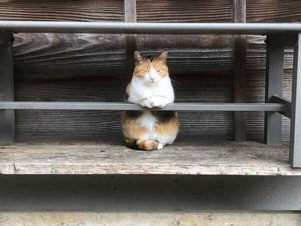 バーを経営する猫? その姿に7万人が「行きたい!」「常連になるレベル」