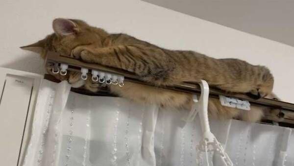 隠れたつもりの猫に、19万人が悶絶! 周囲をメロメロにした『3枚』がこちら