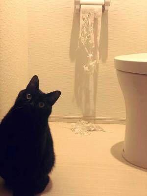 「確かに」「これは無理だ」いたずらした猫、飼い主が怒れなかったワケとは?
