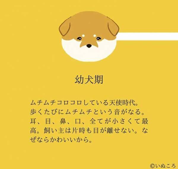 【結論】どの時も犬は最高にかわいい…意味が分かる『4枚』を、ご覧ください