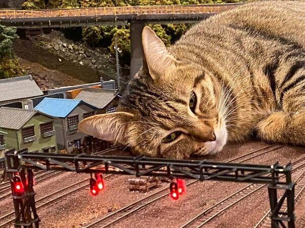 『巨大猫』で列車が運休に!? 最高の世界に「これは許す」「ゴジラみたい!」