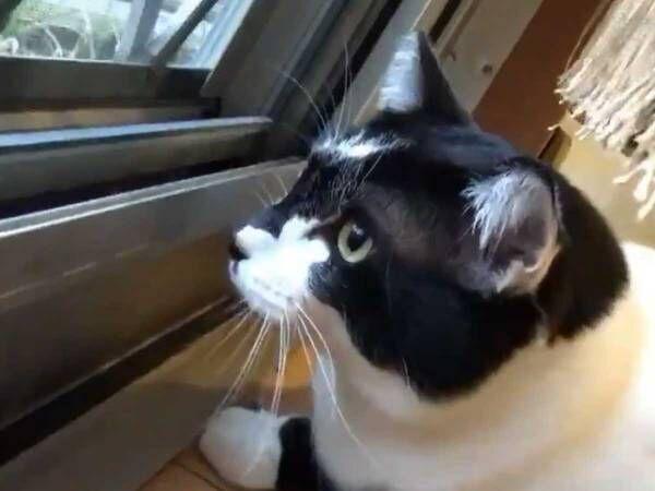 「声が最高!」「ずっと見ていられる」 猫が話しかけているのは?