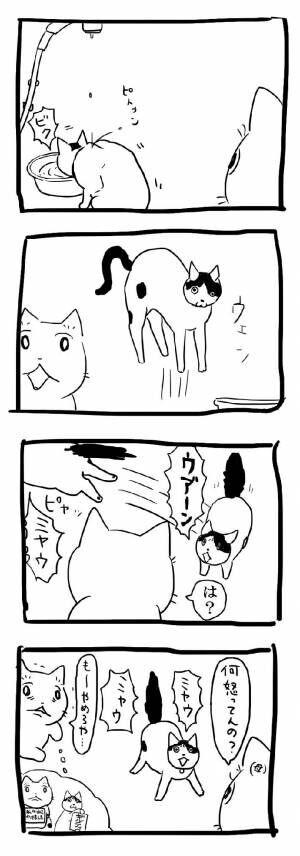 なんでだよ…ッ!? 理不尽な猫の行動に、吹き出す人が続出