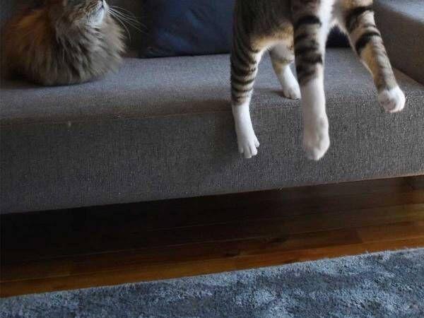 猫じゃらしにハシャぐ猫を撮影したら… まさかの瞬間に、15万『いいね』!