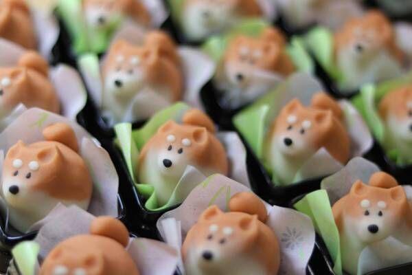柴犬が和菓子に!? 柴犬好きにはたまらない3つの作品がこちら!
