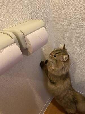 部屋の中に伸びるトイレットペーパー その先を辿っていくと…?
