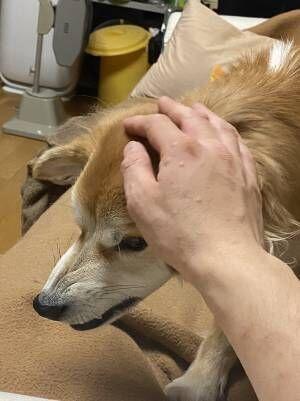 山に捨てられていた犬を保護して2年 すっかり懐いたという犬の姿がこちら
