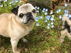 愛犬をパノラマ撮影した写真に「吹き出して笑った」「ジワジワくる」の声