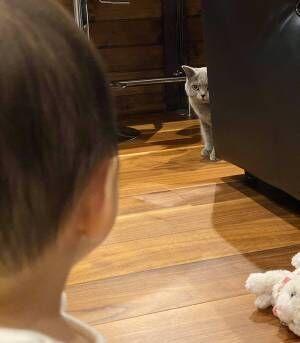 0歳の娘と猫が初対面 決定的な瞬間をとらえた1枚に「最高にかわいい」の声