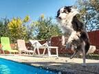 「イエス・キリストか!?」 犬がプールに走っていき…その場が騒然