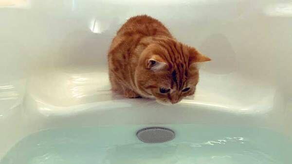 お風呂場へ来た子猫が必ず『すること』とは? とらえた4枚がこちら
