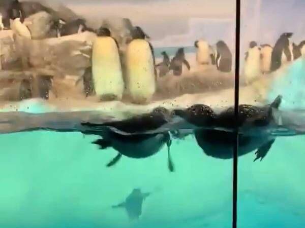 仲良く寄り添うエンペラーペンギン そんな2羽に襲いかかったのは?