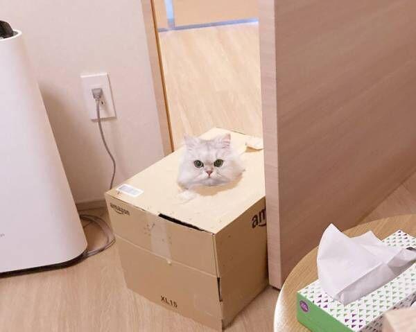 これが『シロネコヤマト』か… 段ボールに入った猫の姿にキュンです!