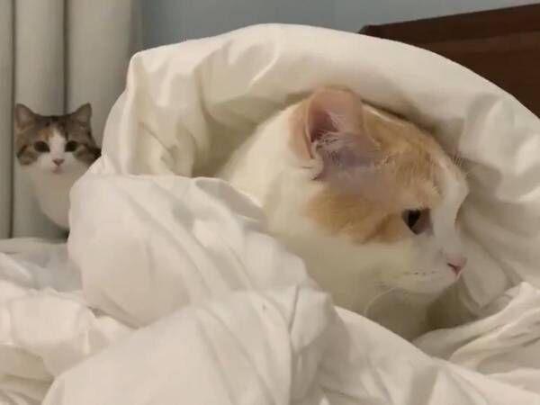 背後の猫が…? 襲撃された猫の表情に吹き出す