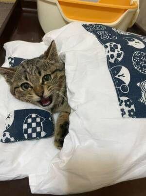 子猫に布団を与えてみた結果? 見せた『寝姿』に「あれ、自分かな?」