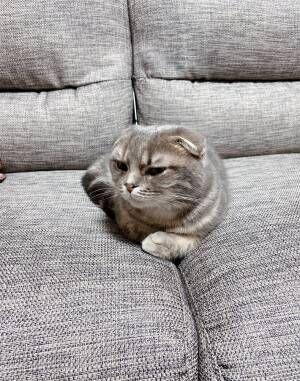 アゴをなでられ、気持ちよさそうな猫 急に手を止めると? 「可愛すぎる」「表情のギャップ」