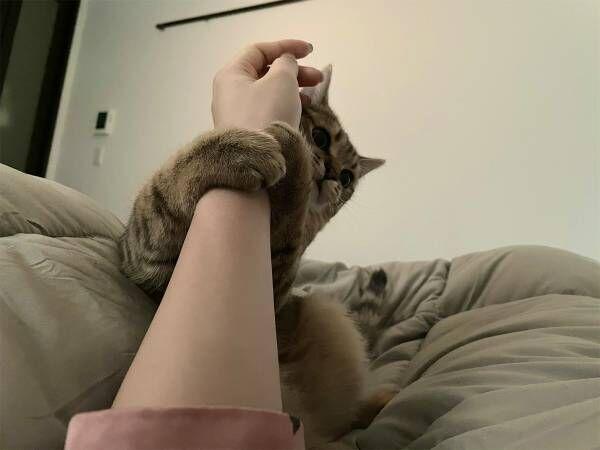 飼い主のアラームが鳴った時の猫の様子がこちら 「賢い」「かわいさを理解してる」の声