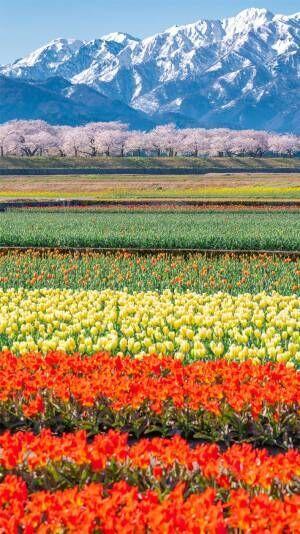 「富山が春に本気を出した」 Twitterに投稿された1枚に、息を呑む