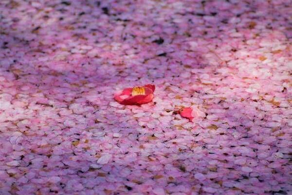 「ピンク色な写真が届きました」 タクシー会社職員が撮影した『4枚』に、うっとり