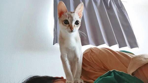 あの…今立っている場所なんですけど… 『猫あるある』にあなたは気付ける?