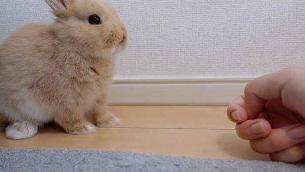 ウサギをなで続けると… 徐々に溶けていく3枚が話題に!